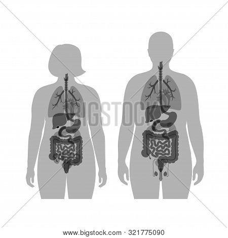 Vector Isolated Illustration Of Human Internal Organs In Obese Male And Woman Body. Stomach, Liver,