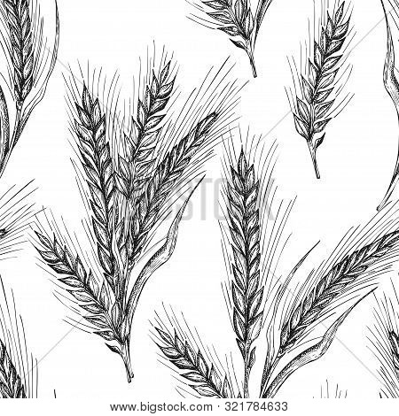 Seamless Pattern Botany Hand Drawn Sketch Ears Of Wheat Sheaf Isolated On White Background. Engravin