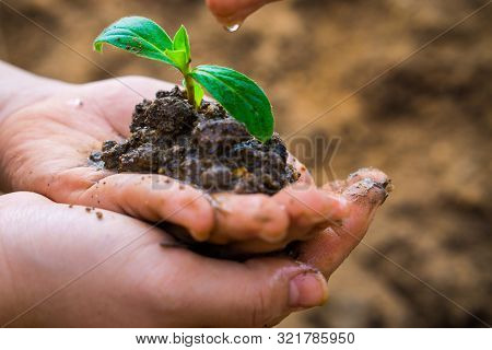 Male Hand Is Watering On Female Hand Hands Holding Little Tree Over Blurred Soil Background. Earth D