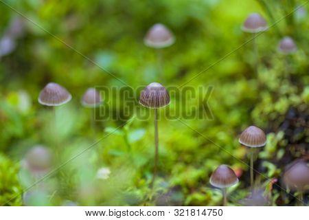 Beatutiful Small Toadstool Mushrooms, Macro, Toadstool Mushrooms