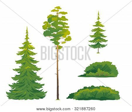 Set Of Forest Trees And Bushes, Green Tall Spruce Tree, European Spruce Evergreen Coniferous Tree, G