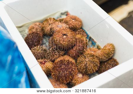 Sea Urchin Or Japanese Uni Popular Seafood Menu Sale In Osaka Food Market In Japan