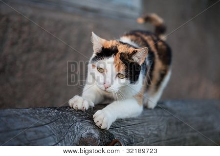 Cute cat clawing away at a wooden log