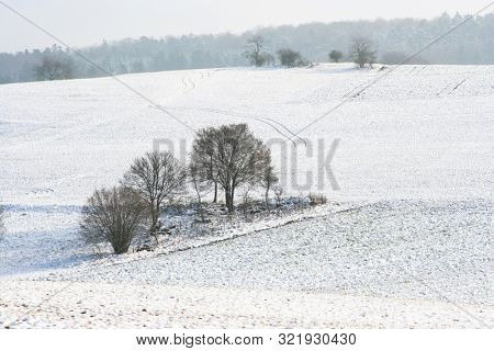 A photography of a snowscape with trees