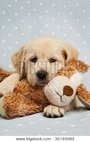 Retriever puppy with a teddy bear