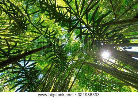 Lush bamboo and palm tree area in the Khao Sok jungle, Thailand