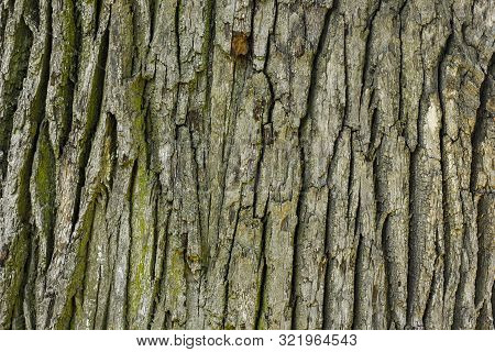 Old Oak Wood Tree Texture Background Pattern