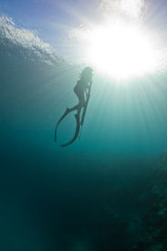Spearfishing On The Reef