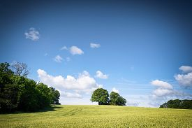 Rural Fields In A Countryside Landscape With Blue Sky Over Green Trees In The Summer