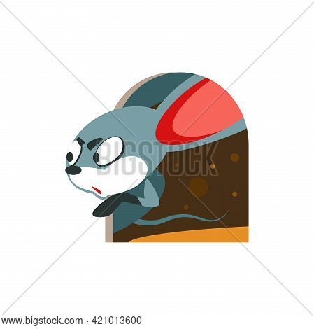 Cartoon Mouse Cautiously Looks Out Of The House. Vector Illustration Character Isolated On White Bac