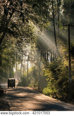 Indian Auto Rickshaw travelling through a tropical forest in Munnar, Kerala, India.