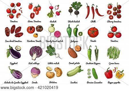 Vector Food Icons Of Vegetables. Colored Sketch Of Food Products. Tomato, Pepper, Eggplant, Salad, H