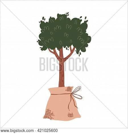 A Seedling Of A Fruit Tree. Planting And Growing Plants. Hand Drawn Flatt Vector Illustration On A W