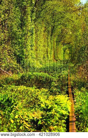 Unique Nature And Travel Destination-tunnel Of Love. It Is Natural Tunnel Formed By Trees And Bushes