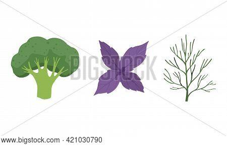 Salad Green Leaves And Leafy Vegetables Set, Broccoli, Basil, Dill, Organic Vegan Healthy Food Vecto