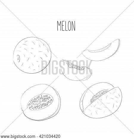 Set Of Hand Drawn Vector Illustration Of Black Ink Line Melon Fruit Against White Background. Whole,