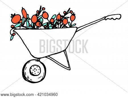 Doodle Closeup Of Doodle Wheelbarrow Red Berries On Red Background. Spring Floral Vector Illustratio