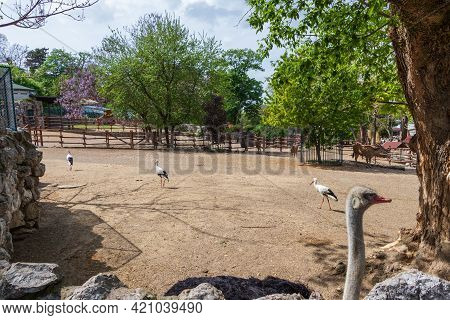 Belgrade, Serbia - May 2, 2021: The Landscape Of The Belgrade Zoo Or The Zoo Beograd