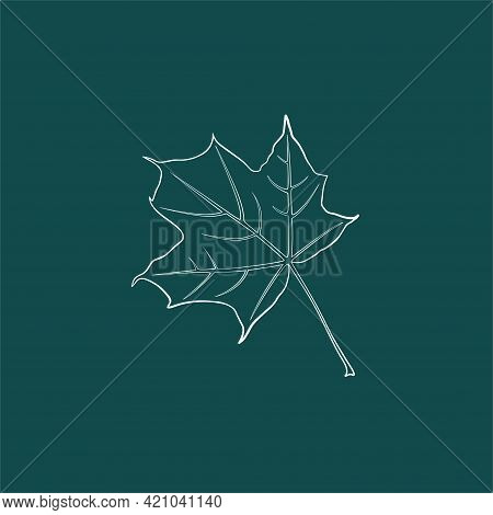 A Graceful Contoured Maple Leaf. Vector Isolated Element. White Line Logo On A Green Background. Gar