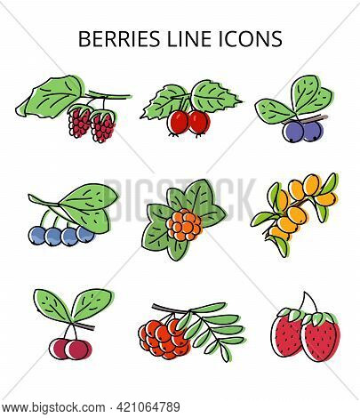 Set Of Natural Berries. Vector Illustration In Flat Style