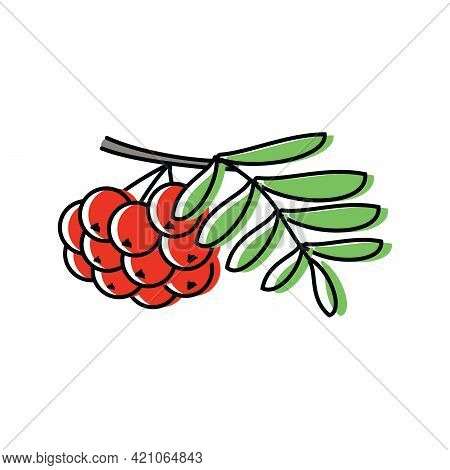 Ashberry. Natural Berries. Vector Illustration In Flat Style