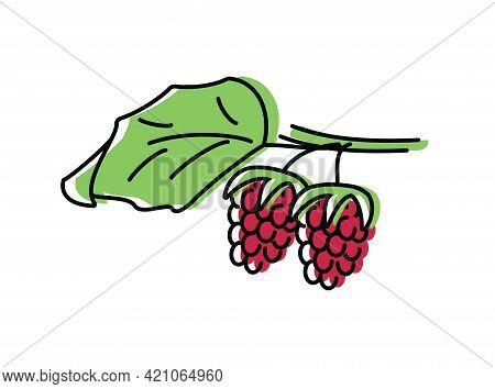 Raspberries. Natural Berries. Vector Illustration In Flat Style