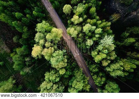Aerial View Of Country Road Through The Pine Tree Forest. Nature Landscape