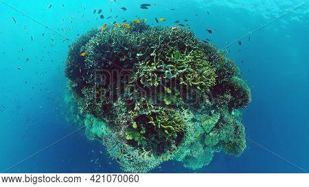 Tropical Fish Corals Marine Reef. Underwater Sea Tropical Life. Tropical Underwater Sea Fishes. Unde