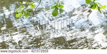 Beautiful Pattern On Surface Of Water, Formed By Wind, And Branches With Green Leaves On Top Of It.