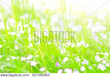 Beautiful Bright Summer Background - Soft Focus Image Of Wild Flowers On A Green Meadow With Bokeh B