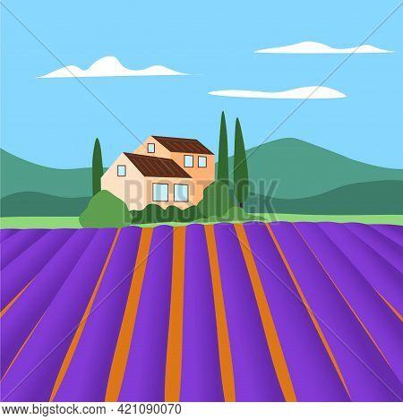 Lavender Fields In Provence Summer. France Rural Landscape Vector.