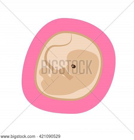 Embryo Development Isolated Icon. Pregnancy, Fetal Fetus Development. Embryo In The Womb Illustratio