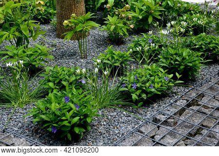 White Bulbs Bloom In A Gabion Basket And Also A Cover Bush Of Periwinkles. In Early Spring They Have