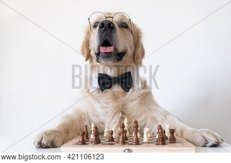A Dog In A Bow Tie And Round Glasses Stands Near A Chessboard. The Golden Retriever Is Playing An In
