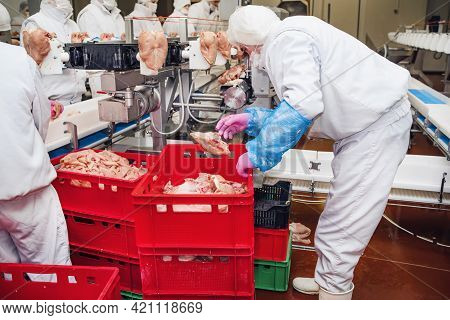 Production Line In The Food Factory Stock Photo.workers At Meet Industry Handle Meat Organizing Pack