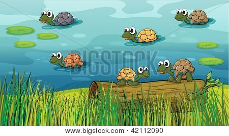 Illustration of a group of turtles in the river