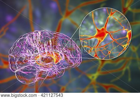 Caudate Nuclei In Human Brain And Its Neurons, 3d Illustration. The Caudate Nucleus Is A Component O