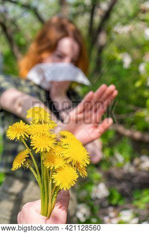 Season Allergy To Flowering Plants Pollen. Dandelion Bouquet Against Young Woman With Paper Handkerc