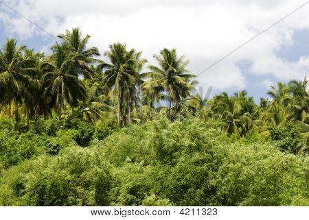 Palm Trees, Jungle Scene