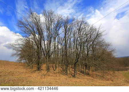 Spring landscape with leafless grove