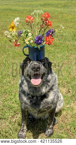 Sweet and humorous image of a spotted dog with a colorful flower bouquet on top of her head