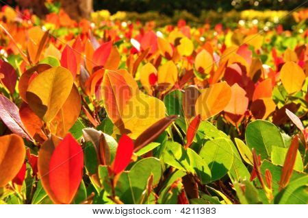 Red And Green Leaves Background