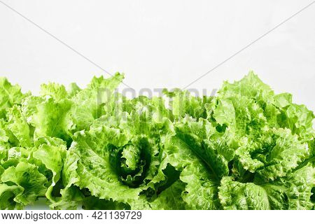 Green Lettuce Leaves On A White Background, Close-up.