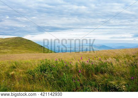 Meadow With Wild Herbs In Mountains. Wonderful Countryside Landscape On A Cloudy Morning In Late Sum