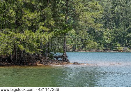 Erosion All Around The Shoreline At Lake Lanier In Georgia With Tree Roots Exposed Holding On To The