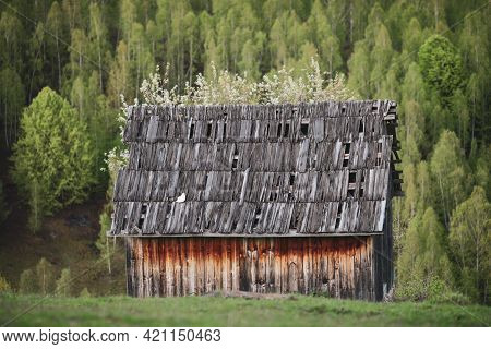 Old Abandoned And Burned Cabin On The Green Hills Of Transylvania, Romania, With Forest In The Backg