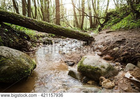 Small And Narrow River Winding Through The Dense Green Forest On Spring.