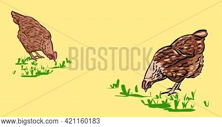 Chickens Peck At The Grass. Hand-drawn Sketch Illustration, Color. The Banner Is Horizontal, For You