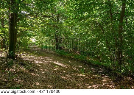 Dirt Road Through Beech Forest. Wonderful Scenery Of Carpathian Nature In Summer. Bright Weather, Da