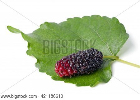 Isolated Mulberry.  Organic Mulberry Fruits With Green Leaves Isolated On White Background.  With Cl